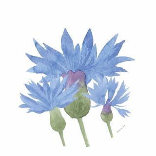 PhotoCake Round WATERCOLOUR CORNFLOWER